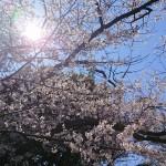 春は寄生虫も動き出す!!
